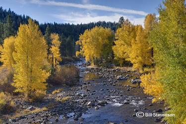 Fall Along the Truckee River by Bill Stevenson
