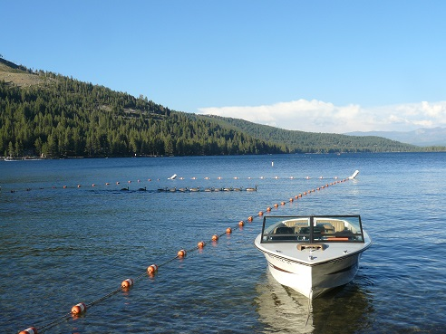 Canadian Geese at Donner Lake in Truckee,  CA