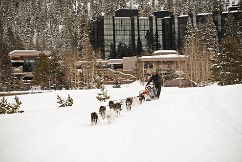 Dog Sledding in Olympic Valley at the Resort at Squaw Creek
