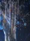 Spirit Tree-Snyder