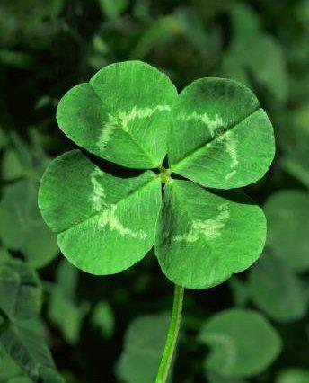Four Leaf Clover for St. Patricks Day