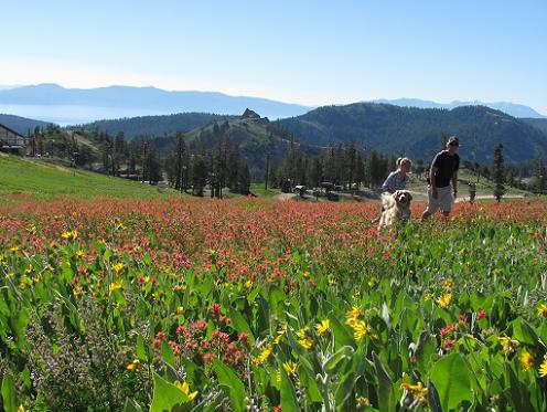 Summer In Truckee California Is Just Perfect Info From Truckee Travel Guide