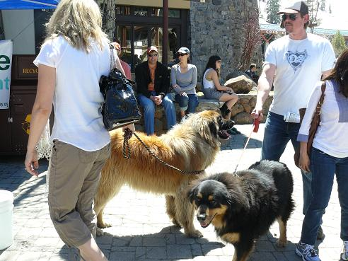Dogs at the 2012 North Tahoe Truckee Earth Day Celebration at Squaw Vally
