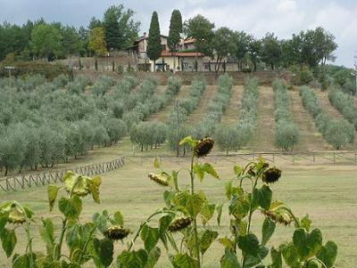 Olive Grove at the Villa Campestri,  Credit: First Trip to Italy
