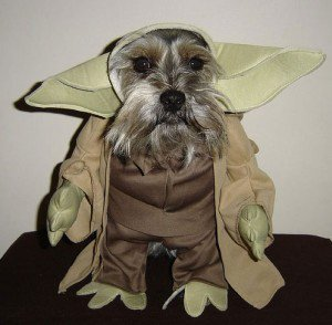 Yoda Pup ready for Hallowee