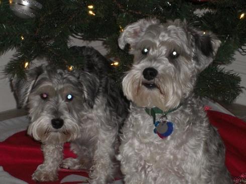 Mario and Luigi Storz - Christmas 2009