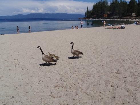 Meeks Bay Beach at Lake Tahoe